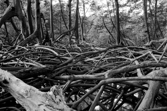 photo of murky forest